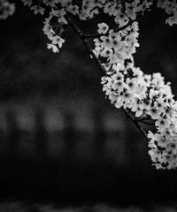 5名様限定神社仏閣写真教室〜京都編〜2020/04/11
