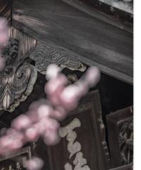 5名様限定神社仏閣写真教室〜京都編〜2020/04/07
