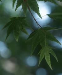 5名様限定神社仏閣写真教室〜京都編〜2020/04/26