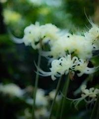 3名様限定神社仏閣写真教室〜京都編〜2020/09/26