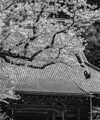 3名様限定神社仏閣写真教室〜鎌倉編〜2020/03/30