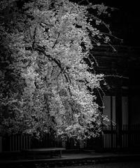 5名様限定神社仏閣写真教室〜京都編〜2020/04/12