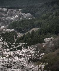 2名様限定神社仏閣写真教室〜奈良&吉野編〜2021/04/05〜07