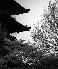 5名様限定神社仏閣写真教室〜京都編〜2020/03/22