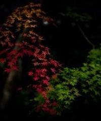 3名様限定神社仏閣写真教室〜奈良編〜2020/11/30