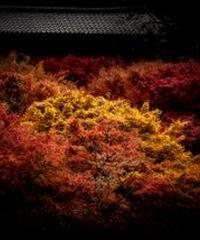 3名様限定神社仏閣写真教室〜京都編〜2020/11/22