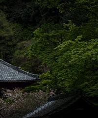5名様限定神社仏閣写真教室〜鎌倉編〜2020/05/04