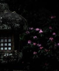 5名様限定神社仏閣写真教室〜京都編〜2020/04/09