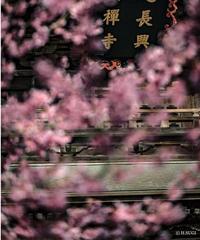 5名様限定神社仏閣写真教室〜鎌倉編〜2020/03/01