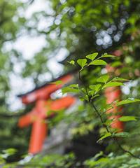 Japan vol.1