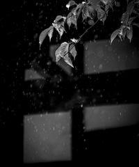 2名様限定神社仏閣写真教室〜滋賀琵琶湖編〜2021/06/10
