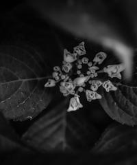 5名様限定神社仏閣写真教室〜京都編〜2020/06/22