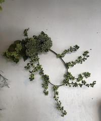 ツルウメモドキと紫陽花の変わり型