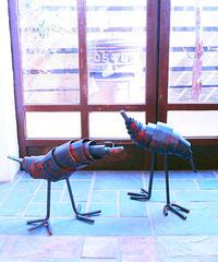 ドラムバード(赤紋様) 1羽