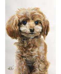 ペットの肖像画 pet portrait(A4)