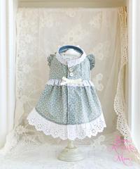 【Botanical Love】Little Paris daisy (リトルパリスデイジー)XSサイズ・Sサイズ