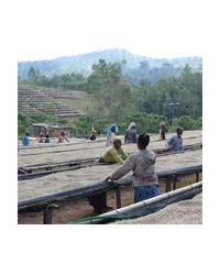 200g Ethiopia – Dumerso Washed エチオピア – ドゥメルソ