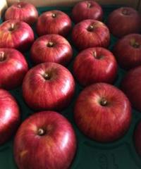 【予約販売・ご予約締切8月末】釈迦のりんご園<直送>つがる 特選5キロ 16玉