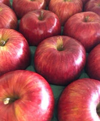 【予約販売・ご予約締切11月15日ごろ 】釈迦のりんご園<直送>サンふじAランク5キロ 16玉