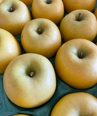 【予約販売・ご予約締切9月末 】釈迦のりんご園<直送>トキ Aランク5キロ 16玉
