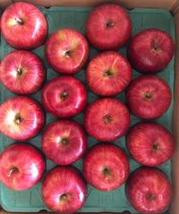 【予約販売・ご予約締切10月10日ごろ 】釈迦のりんご園<直送>シナノスイート Aランク10キロ 32玉