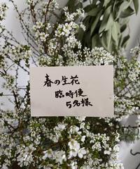 春の生花臨時便 送料込み