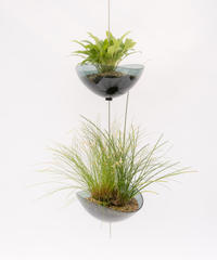 Scaphosepalm S.P.x2 / Dendrochilum S.P / tenellum + Lotus (Recycled glass)