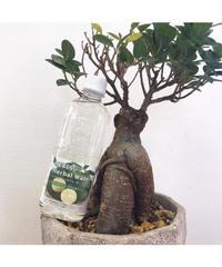 HEBESU Herbal Water by.宮崎日向えこのは