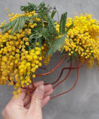 Mimosa wreath
