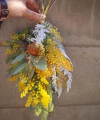 Mimosa Swag Half-dry