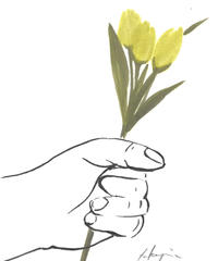 give the flower  [tulip]
