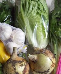 季節の野菜セット(M)3,200円 (送料・税込)