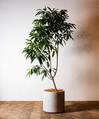 Ficus Amsterdam | フィカス・アムステルダム