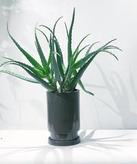 キダチアロエ/ glazed tall pot gray