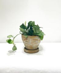 【観葉植物 】スキンダプタス  / ancient  pattern pot