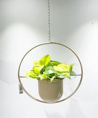 """【観葉植物 】フィロデンドロン""""ブラジル""""   / ハンギングポット ピンク"""