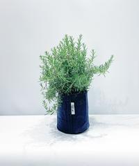 【庭・ベランダ植物 】クリーピングローズマリー  ルートポーチ