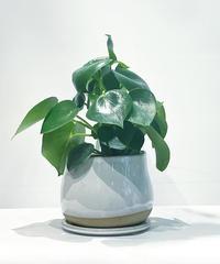 【観葉植物 】ペペロミア  ジェイド / glazed drop pot   white