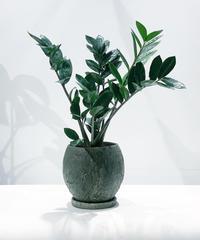 【観葉植物】ザミオクルカス / NOXBALL pot