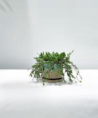 【観葉植物】ルビーネックレス / drip paint pot mint blue