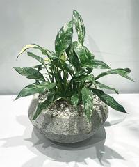 【観葉植物】スパティフィラム 斑入り / stoneUFO pot
