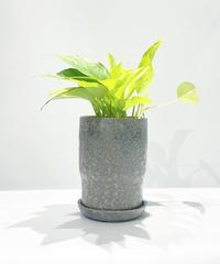 【観葉植物】ポトス ライム / baruna  purple gray