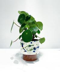 【観葉植物 】ペペロミア  ジェイド / caraminc paint pot