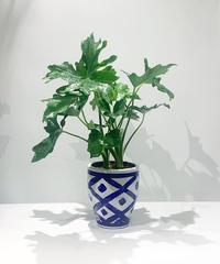 【観葉植物】フィロデンドロン イリニア鉢