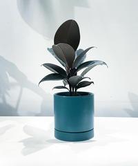【観葉植物 】フィカス・バーガンディ  / SYLINDER MAT POT teal green