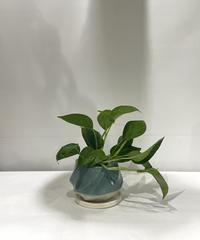 【観葉植物】ポトス・パーフェクトグリーン / screw pot blue LOW