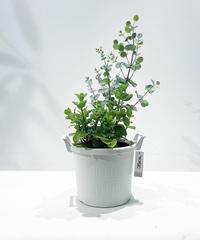 【屋外植物】ユーカリ&ミント寄せ植え