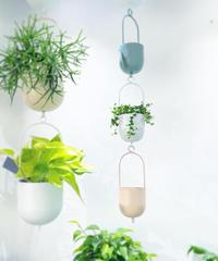 【観葉植物】 グリーンネックレス/ ミニステンレスハンギングポット