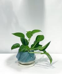 【観葉植物 】 ポトス パーフェクトグリーン  /  screw pot tall   blue