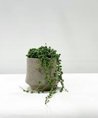 【観葉植物】グリーンネックレス / crackskin pot